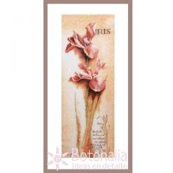 Iris - Botanical