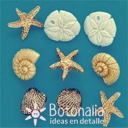 Dress-it-Up - Seashells At The Seashore